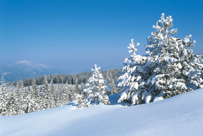 Winter Forest in Carinthia
